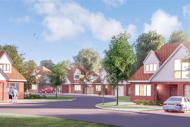 Thumbnail Detached house for sale in West Close, Polegate, East Sussex