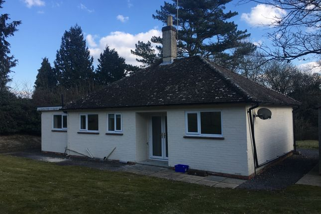 Thumbnail Detached bungalow to rent in Mill Lane, Steep, Nr Petersfield