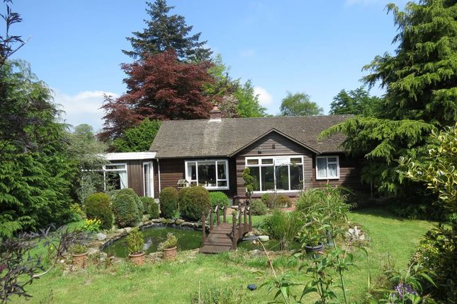 Thumbnail Detached bungalow for sale in Rillside, Sunnyside, Ormiston, Hawick