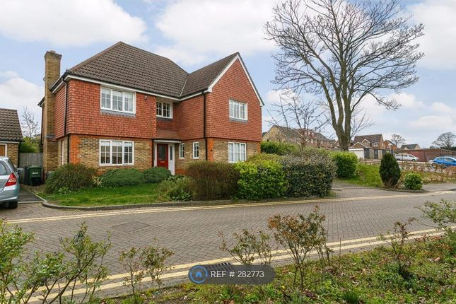Thumbnail Detached house to rent in Trenear Close, Orpington