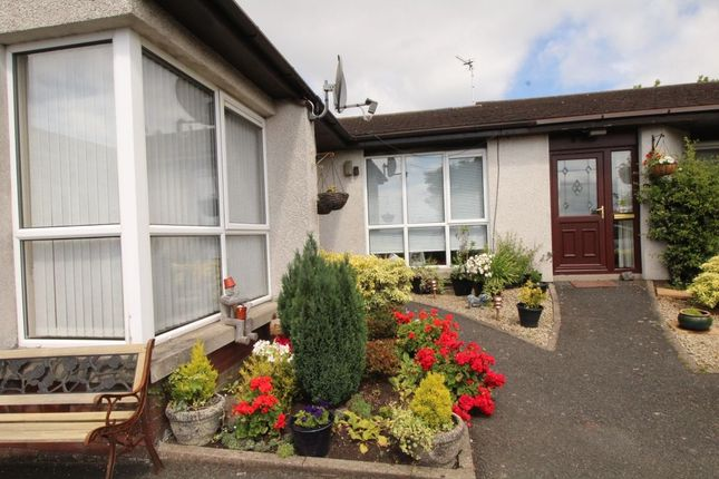 Thumbnail Bungalow to rent in Old Movilla Road, Newtownards
