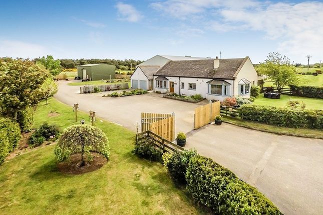 Thumbnail Bungalow for sale in Fearn, Tain