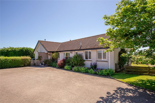 Thumbnail Bungalow for sale in Lonemore, Dornoch, Sutherland