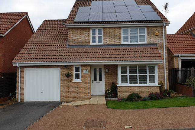 Thumbnail Detached house for sale in Palomino Drive, Downham Market, Norfolk