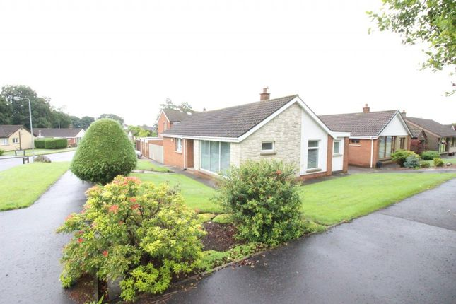 Thumbnail Bungalow for sale in Beech Green, Ballyclare