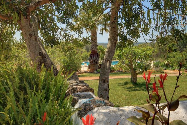 Gardens And Pool of Silves, Algarve, Portugal
