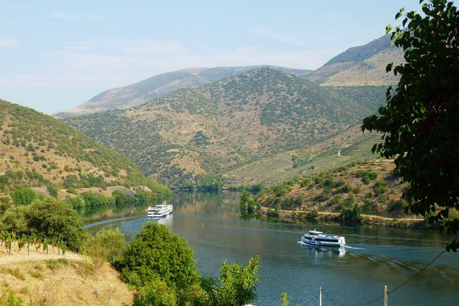 Thumbnail Land for sale in P167, Farm With 250 Hectares Confining With Douro River, Portugal