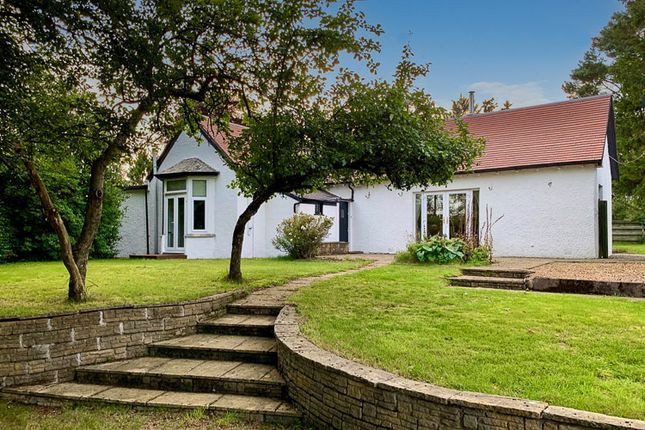 Thumbnail Detached bungalow for sale in Golf Course Road, Rosemount, Blairgowrie