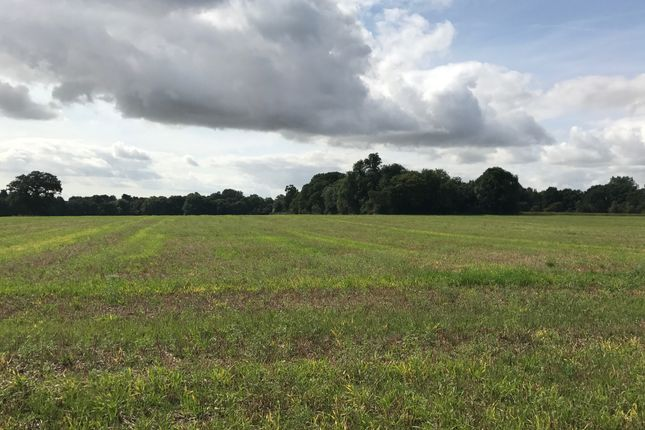 Thumbnail Land for sale in Crow Lane, Tendring, Clacton-On-Sea