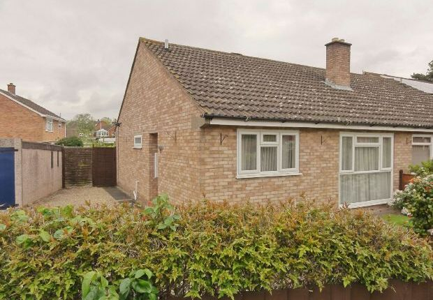 Thumbnail Semi-detached house to rent in Birch Close, Ledbury