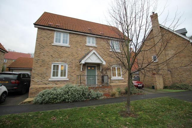 Thumbnail Detached house to rent in Spindle Street, Colchester, Essex