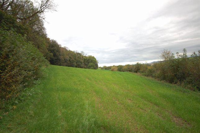 Field of Dol-Y-Bont, Borth SY24