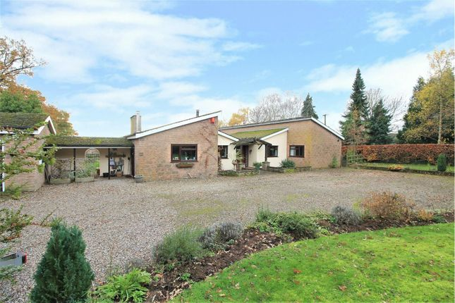 Thumbnail Detached bungalow for sale in Laskett Lane, Hereford