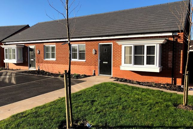 Thumbnail Semi-detached bungalow to rent in Wilding Drive, Crewe