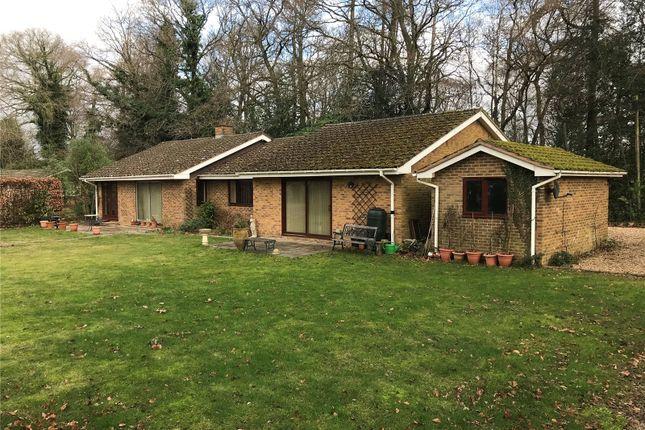Thumbnail Bungalow to rent in The Avenue, Rowledge, Farnham, Surrey