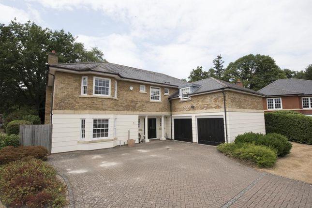 Thumbnail Detached house to rent in Lytton Park, Cobham