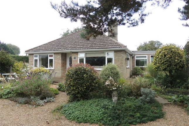 Thumbnail Detached bungalow for sale in Ash Close, Downham Market