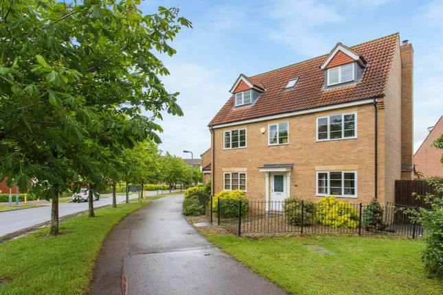 Thumbnail Detached house for sale in Morland Drive, Grange Farm, Milton Keynes