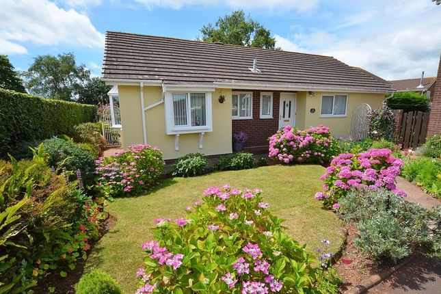 Thumbnail Bungalow for sale in Hookhills Road, Hookhills, Paignton