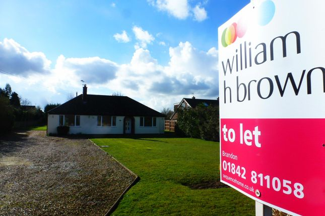 Thumbnail Bungalow to rent in Drift Road, Lakenheath, Brandon