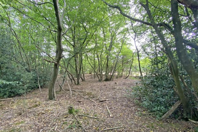 Land2A of Hempstead Lane, Hailsham BN27