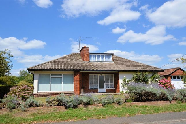 Thumbnail Detached bungalow to rent in Wychelm Road, Shinfield, Reading