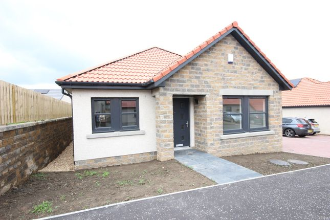 Thumbnail Detached bungalow for sale in The Avenue, Lochgelly