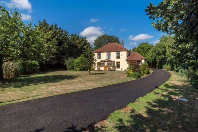 Thumbnail Detached house for sale in Acle Bridge, Acle, Norwich