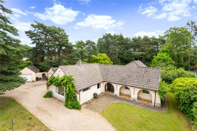 Thumbnail Detached bungalow for sale in Avon Avenue, Ringwood, Hampshire