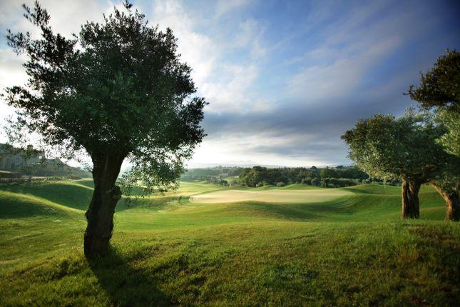 Golf Front_Olives