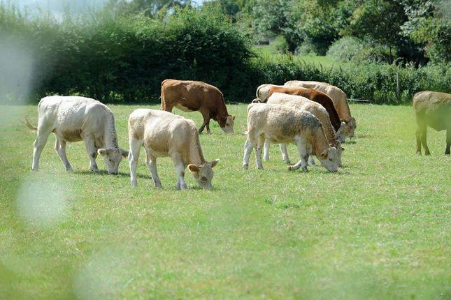 Photo 19 of , Lyne Lane, Chertsey, Surrey KT16