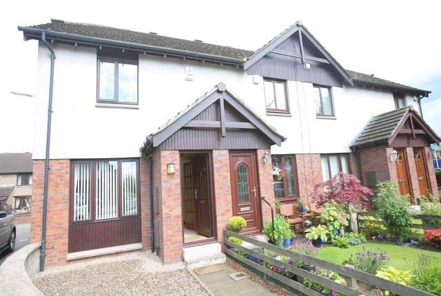 Thumbnail Semi-detached house to rent in Charlotte Close, Dundee