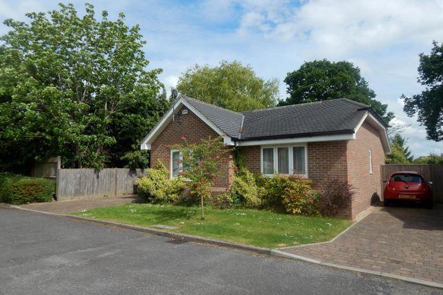 Thumbnail Bungalow to rent in Ridgeway Close, Cranleigh