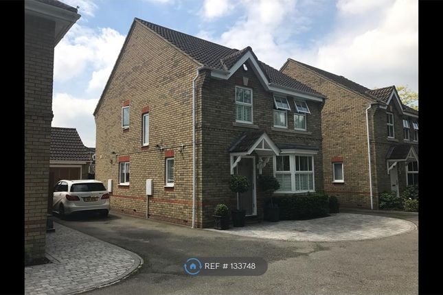 Thumbnail Detached house to rent in Brancaster Drive, Braintree