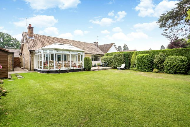 Thumbnail Bungalow for sale in Chiltley Way, Liphook, Hampshire
