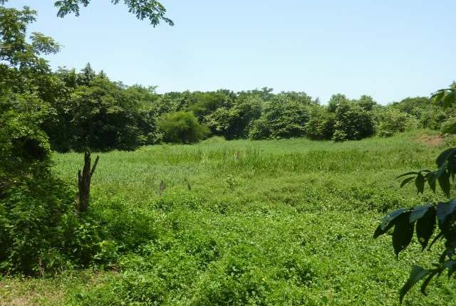 Thumbnail Land for sale in Bluefields, Westmoreland, Jamaica