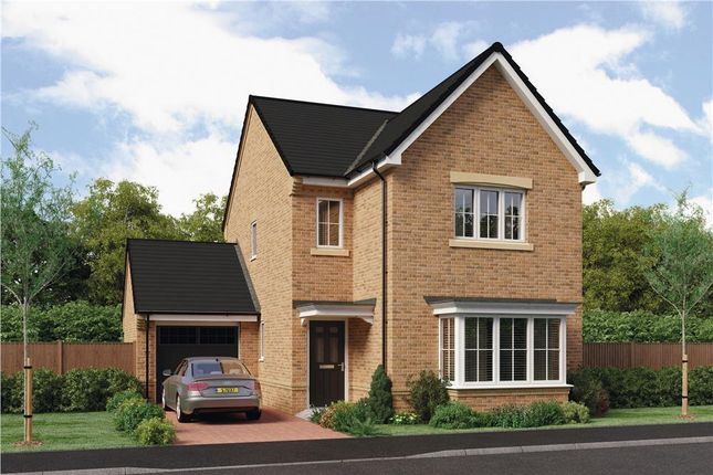 "Thumbnail Detached house for sale in ""The Esk"" At Ladyburn Way, Hadston, Morpeth NE65, Hadston,"