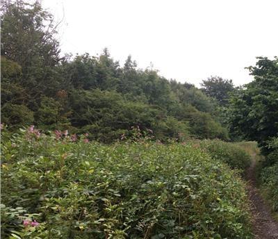Thumbnail Land for sale in Land At Nook Lane, Oswaldtwistle