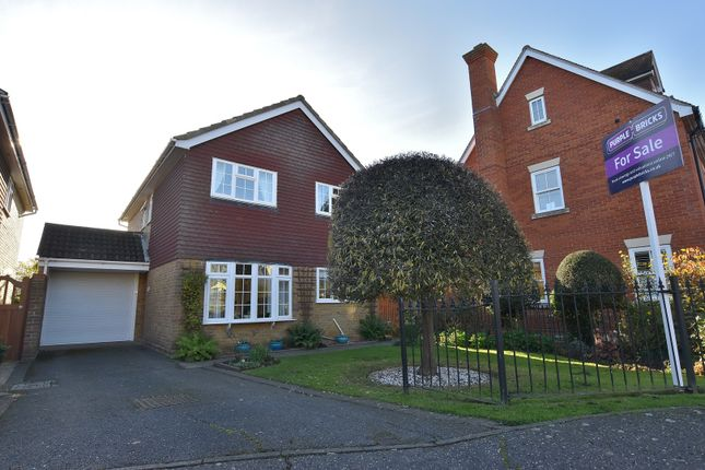 Thumbnail Detached house for sale in Sackville Close, Chelmsford