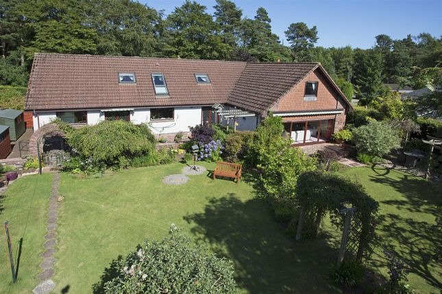Thumbnail Detached house for sale in The Beeches, East Hill Road, Northmuir, Kirriemuir