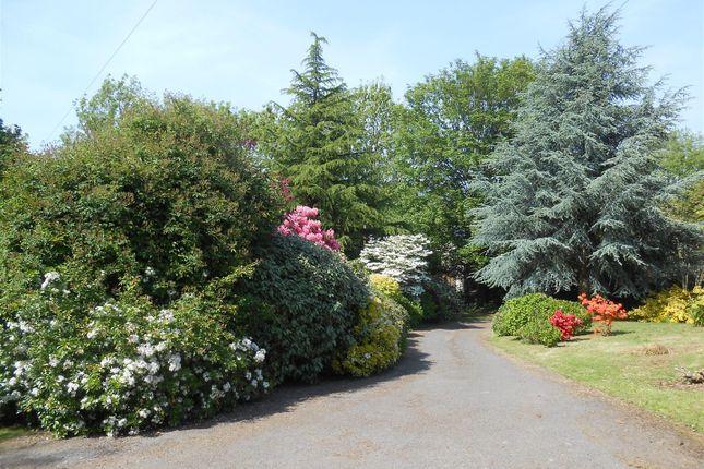 Plot At Brambles, Access Road In Summer