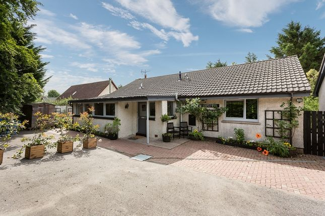 Thumbnail Bungalow for sale in Duncan Road, Letham, Angus
