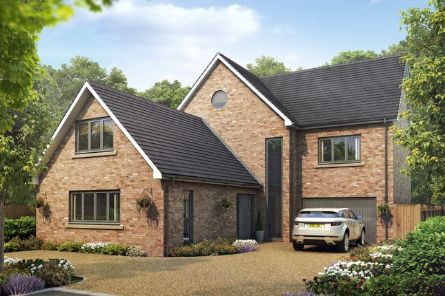 Thumbnail Detached house for sale in Great Totham, Maldon