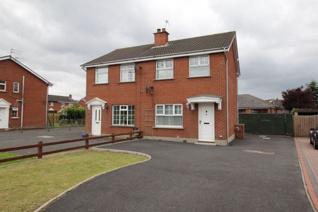 Thumbnail Semi-detached house to rent in Ashbury Avenue, Bangor