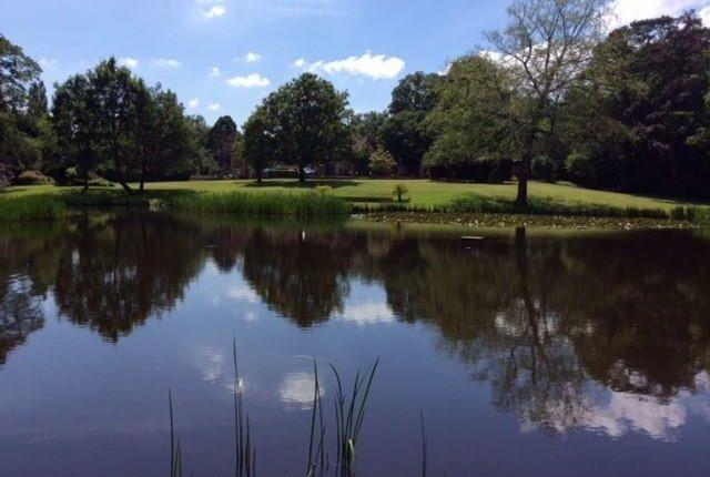 Thumbnail Land for sale in Windlesham, Surrey