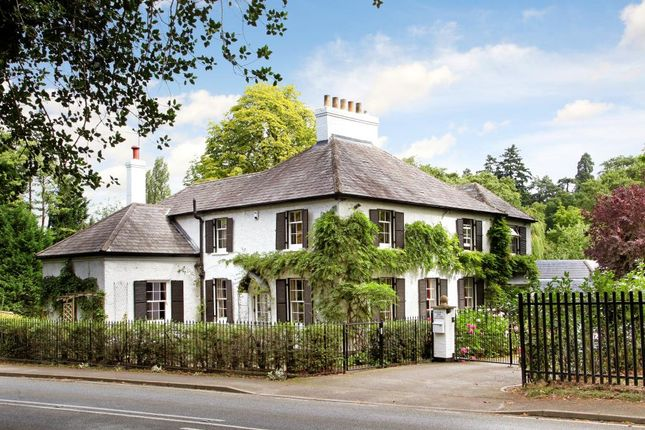 Thumbnail Detached house to rent in Buckhurst Road, Ascot
