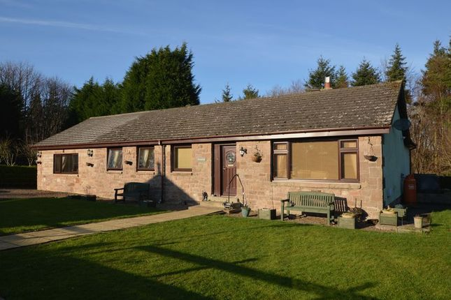 Thumbnail Bungalow for sale in Warenford, Belford