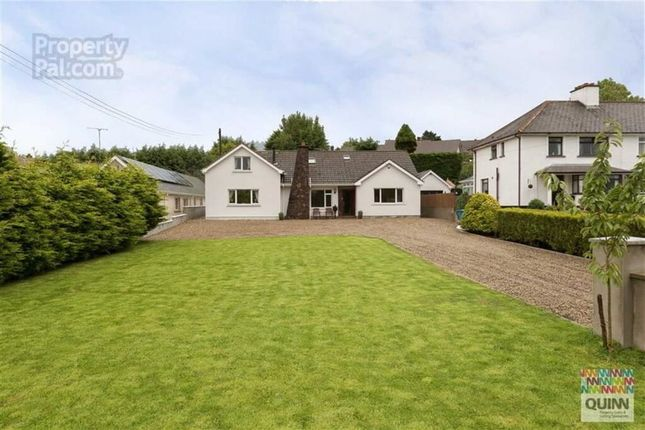 Thumbnail Detached bungalow to rent in Belfast Road, Ballynahinch, Down