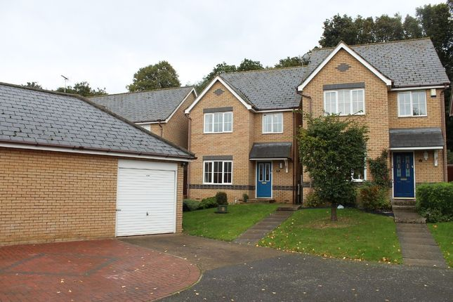Thumbnail Detached house to rent in Draymans Way, Ipswich