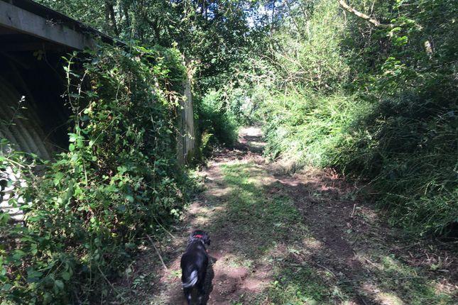 Img_0541 of Wood Lane, Combe Martin, Ilfracombe EX34
